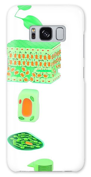 Tissue Galaxy Case - Leaf To Chloroplast by Science Photo Library