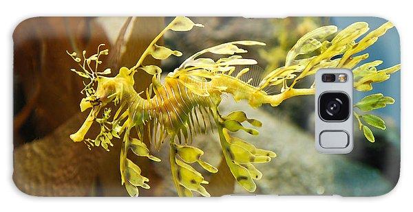 Leafy Sea Dragon Galaxy Case by Shane Kelly