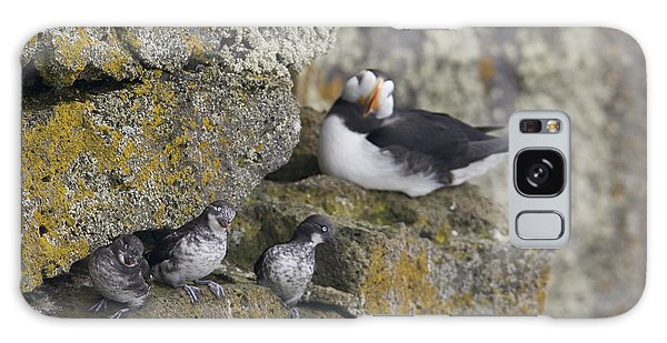 Least Auklets Perched On A Narrow Ledge Galaxy Case