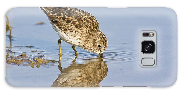 Least Sandpiper With A Reflection  Galaxy Case by Ruth Jolly