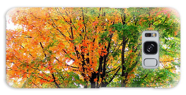 Leaves Changing Colors Galaxy Case by Cynthia Guinn