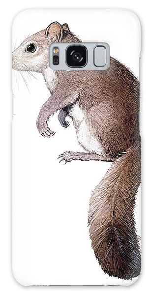 Traits Galaxy Case - Leithia Giant Dormouse by Michael Long/science Photo Library
