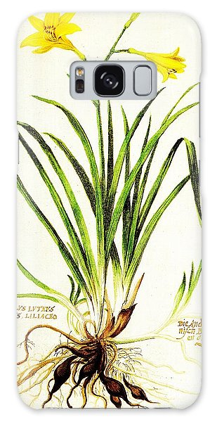Galaxy Case featuring the drawing Lemon Daylily Botanical by Rose Santuci-Sofranko