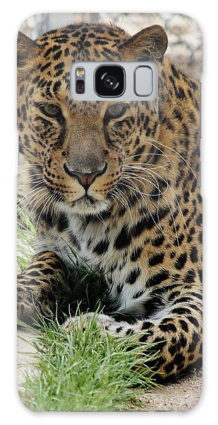 Leopard Lounging 1 Galaxy Case by Diane Alexander