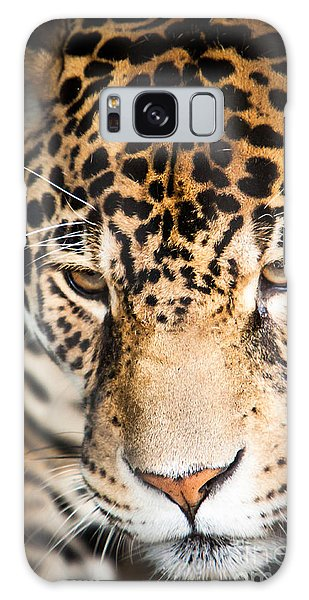 Leopard Resting Galaxy Case