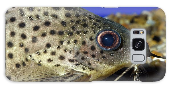 Leopard Sailfin Pleco Galaxy Case