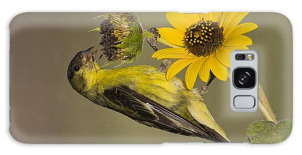 Lesser Goldfinch On Sunflower Galaxy Case