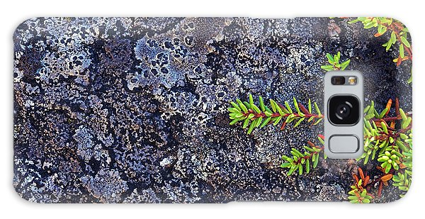 Cairngorms National Park Galaxy Case - Lichen by Duncan Shaw/science Photo Library