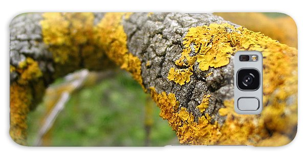 Lichen On Branch Galaxy Case
