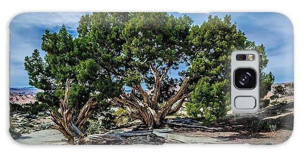Limber Pine Galaxy Case