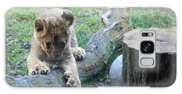 Lion Cub At Play Galaxy Case