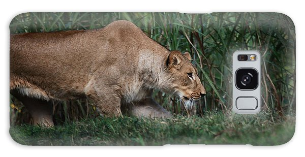 Lioness Stalking Galaxy Case by Joseph G Holland
