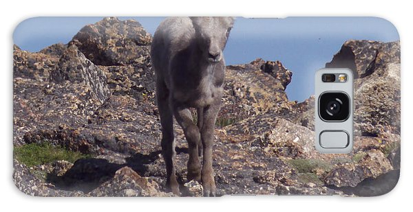 Little Big Horn Sheep Looking Galaxy Case