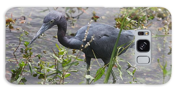 Little Blue Heron - Waiting For Prey Galaxy Case by Christiane Schulze Art And Photography