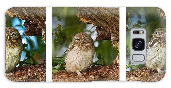Little Owl Triptych Galaxy Case
