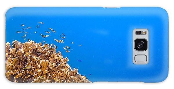 Little Reefers Galaxy Case