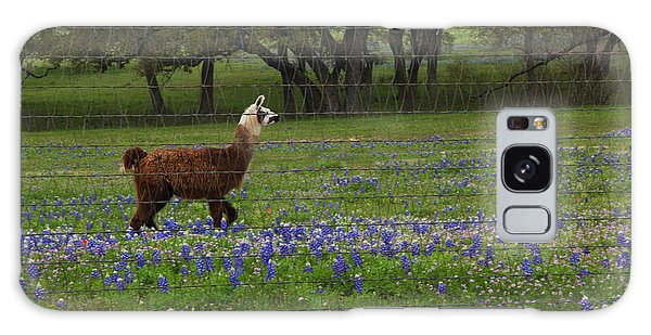 Llama In Bluebonnets Galaxy Case by Susan Rovira