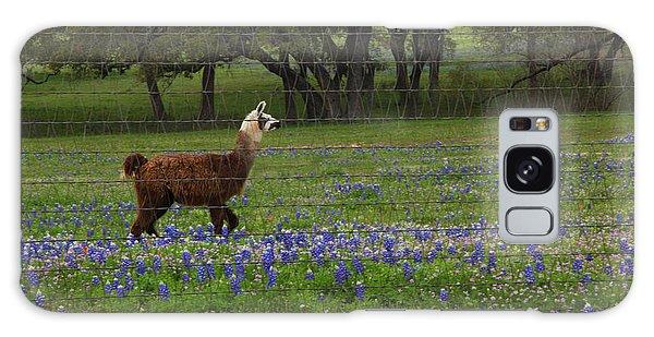 Llama In Bluebonnets Galaxy Case