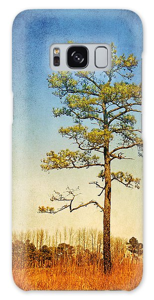 Loblolly Pine Along The Chesapeake Galaxy Case