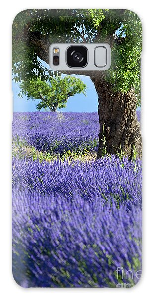 Lone Tree In Lavender Galaxy Case