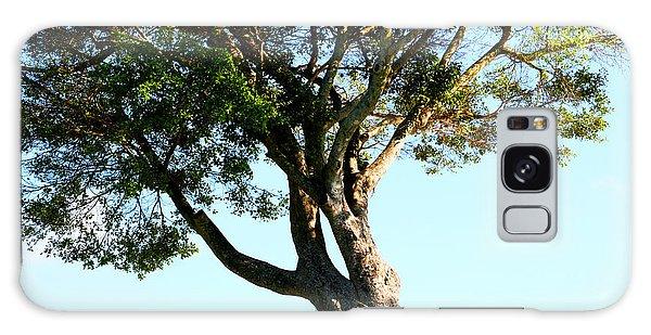 The Lone Tree Original Galaxy Case