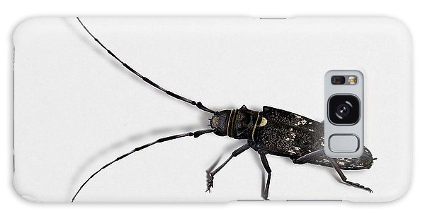 Long-hornded Wood Boring Beetle Monochamus Sartor - Coleoptere Monochame Tailleur - Galaxy Case