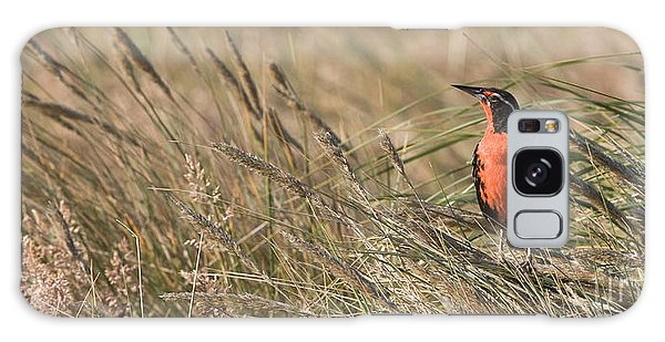 Long-tailed Meadowlark Galaxy Case