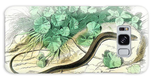Whip Galaxy Case - Longtail Whip Lizard by Collection Abecasis/science Photo Library