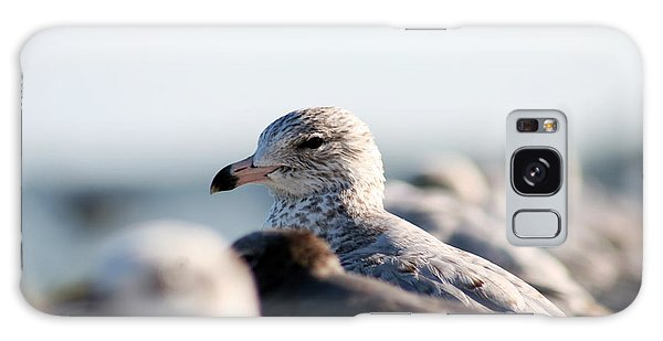 Looking Seagull Galaxy Case