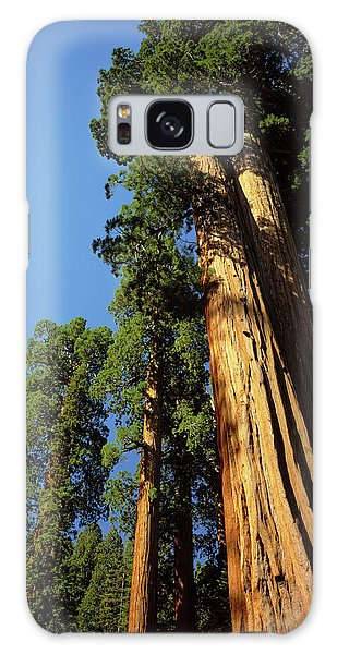 Kings Canyon Galaxy Case - Looking Up A Giant Sequoia Tree by Greg Probst