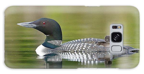 Loon Chick With Parent - Quiet Time Galaxy Case