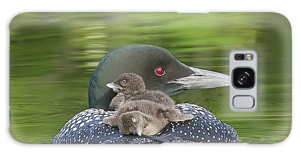 Loon Chicks -  Nap Time Galaxy Case
