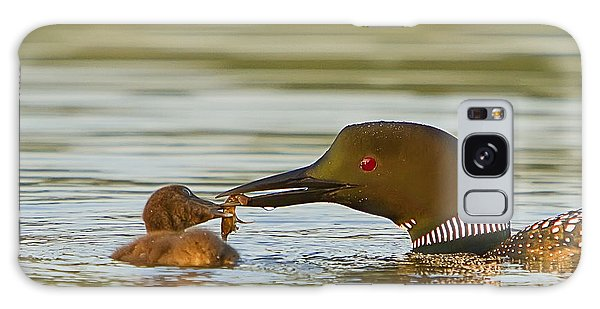 Loon Feeding Chick Galaxy Case