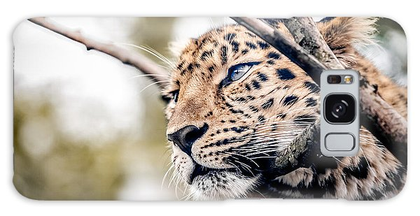 Galaxy Case featuring the photograph Love Panther Iv by Stwayne Keubrick