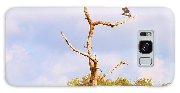 Boynton Galaxy Case - Low Angle View Of A Cormorant by Panoramic Images