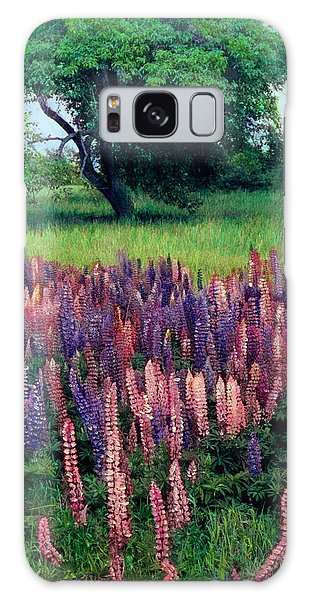 Lupines Midcoast Maine Galaxy Case