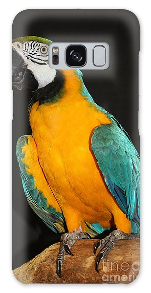 Macaw Hanging Out Galaxy Case by John Telfer