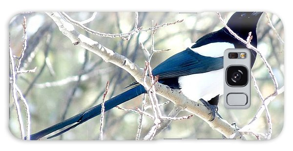 Magpie On Aspen Tree Galaxy Case