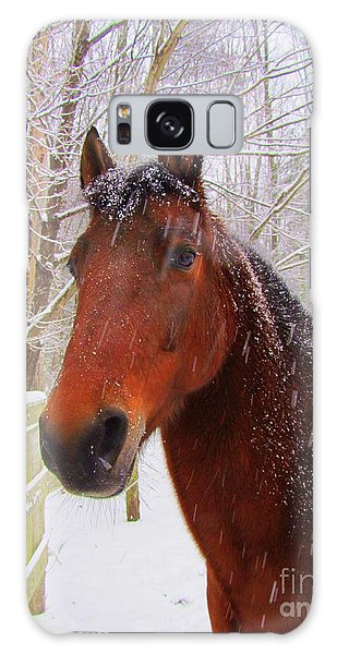 Majestic Morgan Horse Galaxy Case