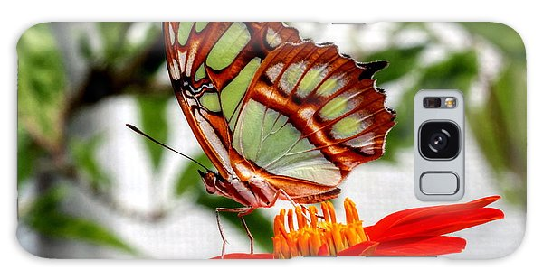 Malachite Butterfly On A Mexican Coneflower Galaxy Case