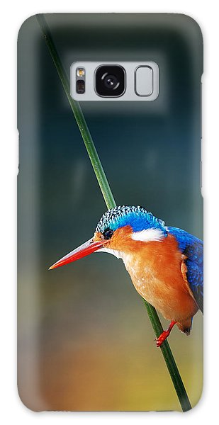 Malachite Kingfisher Galaxy Case by Johan Swanepoel
