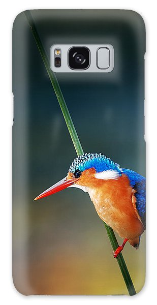 Colour Galaxy Case - Malachite Kingfisher by Johan Swanepoel