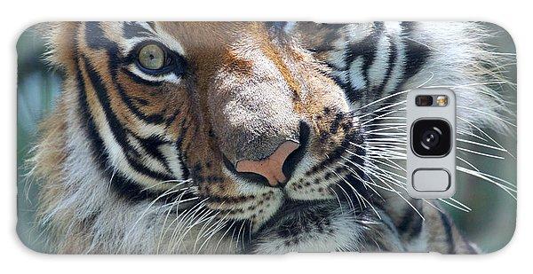 Malayan Tiger Galaxy Case
