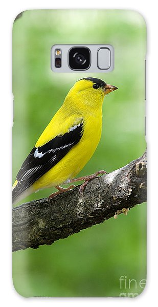 Male American Goldfinch Galaxy Case