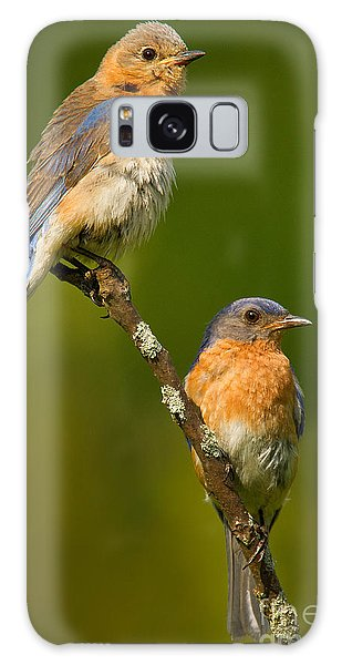 Male And Female Bluebirds Galaxy Case by Jerry Fornarotto