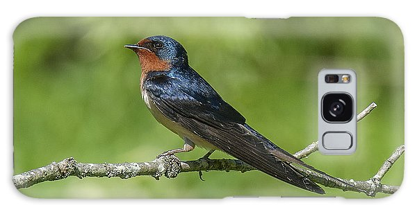 Male Barn Swallow Hirundo Rustica Dsb262 Galaxy Case