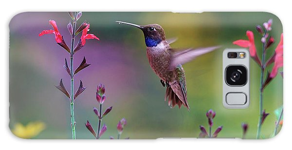 Male Black-chinned Hummingbird Galaxy Case