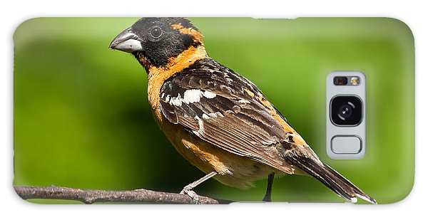 Male Black Headed Grosbeak In A Tree Galaxy Case