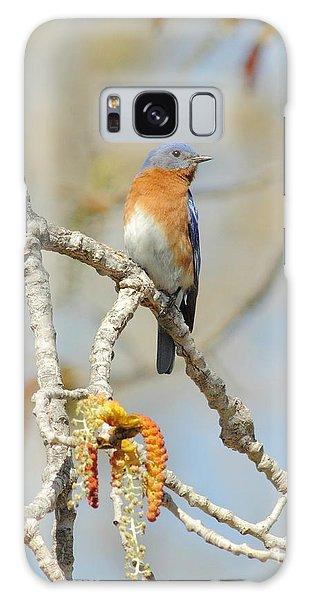 Male Bluebird In Budding Tree Galaxy Case by Robert Frederick