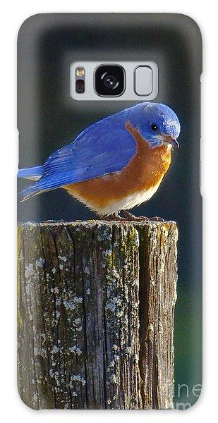 Male Bluebird Galaxy Case